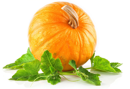 کدو تنبل / Pumpkins