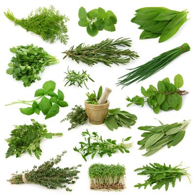 گیاهان / Herbs