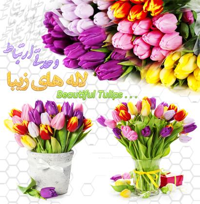 گلهای لاله / Tulips Flowers