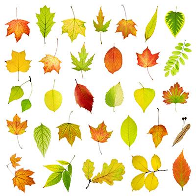 برگها / Leaves