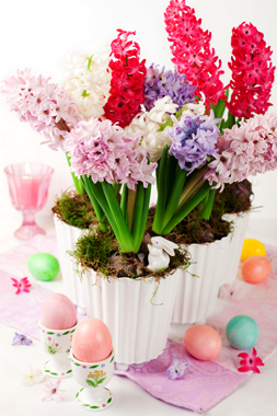 گلهای بهاری / Spring Flowers