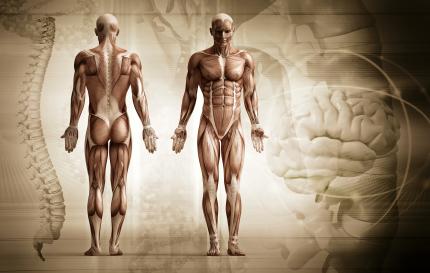 آناتومی بدن انسان / Human Body Anatomy