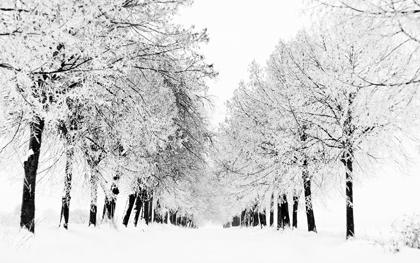 زمستان / Winter