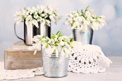 گل برفی / Snowdrop