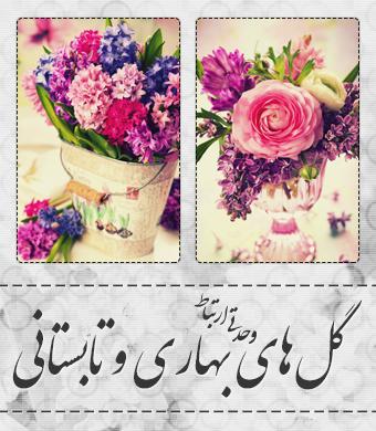 گلهای بهاری و تابستانی / Spring And Summer Flowers