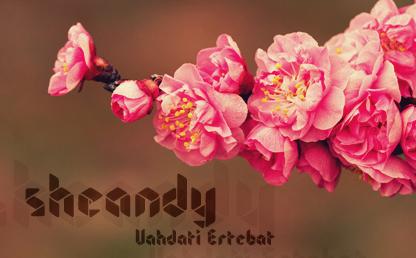 Sheandy By Wates Awal