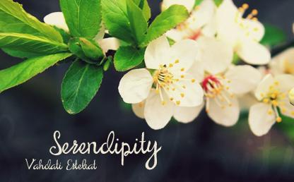 Serendipity Script By Maroon Baboon