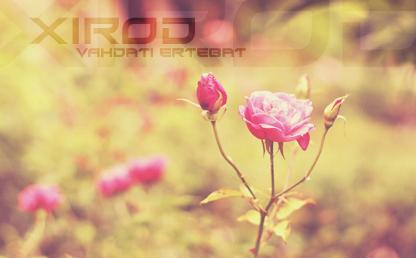 Xirod By Raymond Larabie